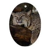 Bobcat Oval Ornament