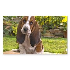 Basset puppy Decal