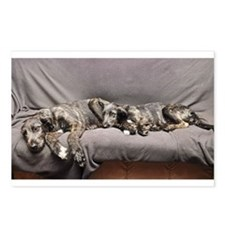 Irish Wolfhound puppies on the couch Postcards (Pa
