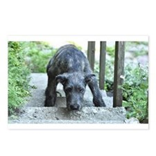 Nefertiti the Irish wolfhound puppy Postcards (Pac