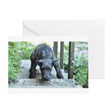 Nefertiti The Irish Wolfhound Puppy Greeting Cards