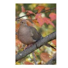 Dove2.34x3.2 Postcards (Package of 8)
