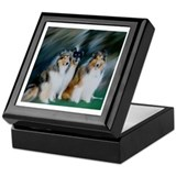 Collie Trio Keepsake Box