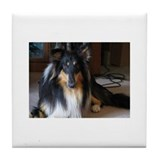 Black Beauty Collie Tile Coaster
