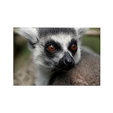 lemur note Rectangle Magnet