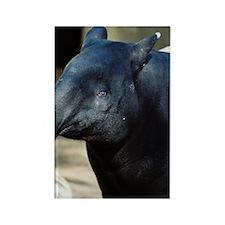 Portrait of a Malayan Tapir Rectangle Magnet