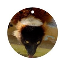 A Red Ruffed Lemurs drinking Round Ornament