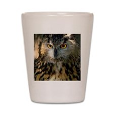 A Bengalese Eagle Owl Shot Glass