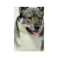 Swedish Vallhund 9K1D-14 Rectangle Magnet