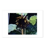 Dark Sunflower Postcards (Package of 8)