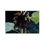 Dark Sunflower Rectangle Magnet