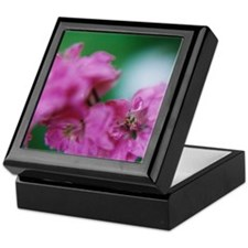 Focal Keepsake Box