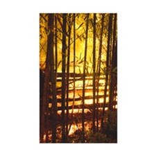 GlowInThe Bamboo Decal