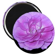 Lavender Rose iPhone 4 Slider Case Magnet