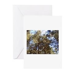 Sky Thru Trees Greeting Cards (Pk of 10)