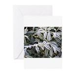 Iced Peony Greeting Cards (Pk of 10)