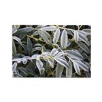 Iced Peony Rectangle Magnet (100 pack)