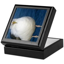 sea gull close-up 3 Keepsake Box