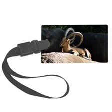 Nubian Ibex showing off his good Luggage Tag
