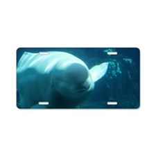 Close up of a Beluga Whale  Aluminum License Plate