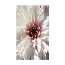 White and Pink Chrysanthemum Decal