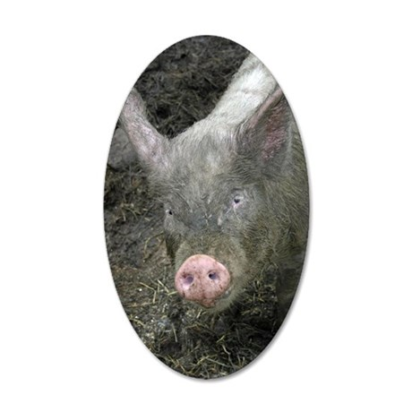 6653 Pig 2 35x21 Oval Wall Decal