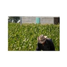 Tobacco farmer picking tobacco in Rectangle Magnet