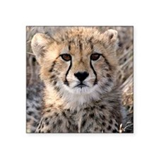 "Cheetah Cub4-1large Square Sticker 3"" x 3"""
