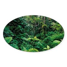 El Junque Rainforest National Park. Decal