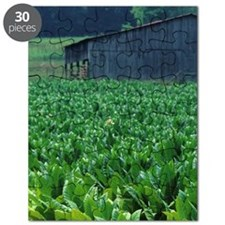 Tobacco farm. Puzzle