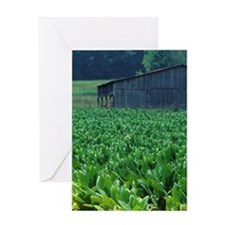 Tobacco farm. Greeting Card