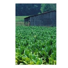 Tobacco farm. Postcards (Package of 8)