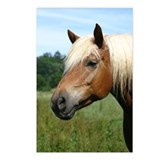 Haflinger Postcards (Package of 8)