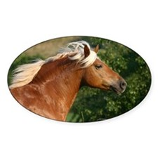 Haflinger Oval Decal