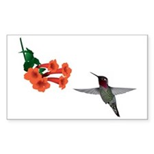 hummingbird2 Decal