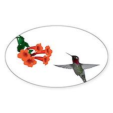hummingbird2 Decal