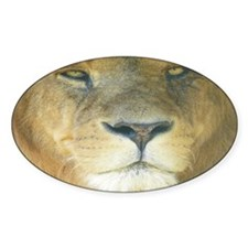 Lion Lposter Decal