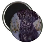 Flat Coated Retriever 2.25