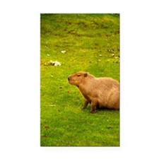 Capybara Rectangle Car Magnet