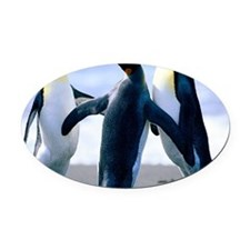 Penguins - Copy Oval Car Magnet
