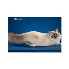 Birman Rectangle Magnet