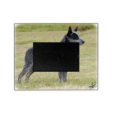 Australian Stumpy Tail Cattle Dog 9Y Picture Frame