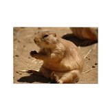 Prairie Dog Rectangle Magnet