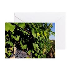 Greve. Chianti grapes from the viney Greeting Card
