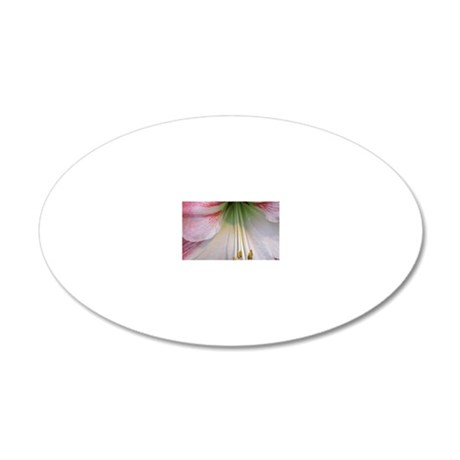 Close up of an amaryillis bl 20x12 Oval Wall Decal