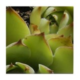 Green Sedum Tile (3 of 6)