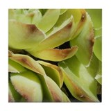 Green Sedum Tile (5 of 6)
