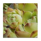 Green Sedum Tile (1 of 6)