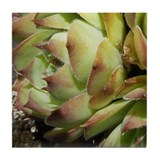 Green Sedum Tile (4 of 6)