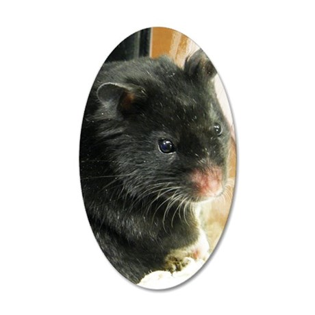 Black Hamster 35x21 Oval Wall Decal